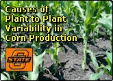 Causes of Plant to Plant Variability in Yield within Corn Production Systems