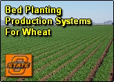 Bed Planting Production Systems for Spring Wheat and Winter Wheat