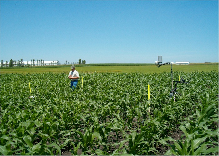 by-plant sensor readings using the GreenSeeker sensor from NTech Industries and Oklahoma State University
