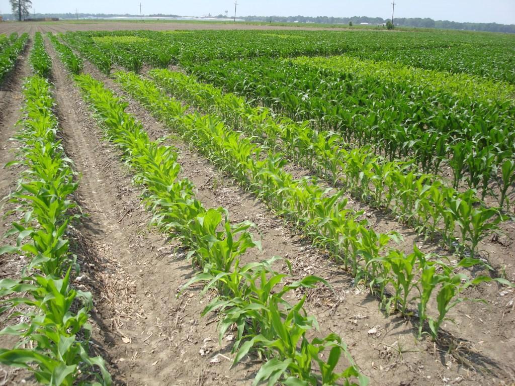 how to fix nitrogen deficiency in plants