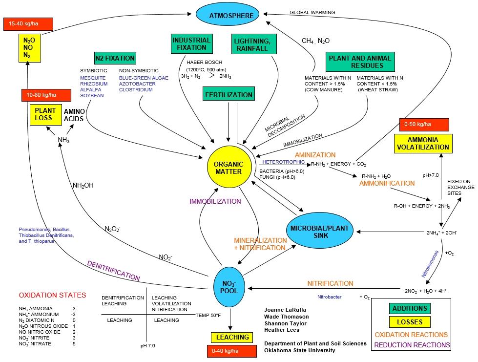 Nitrogen use efficiency defined nitrogen cycle nue ccuart Gallery