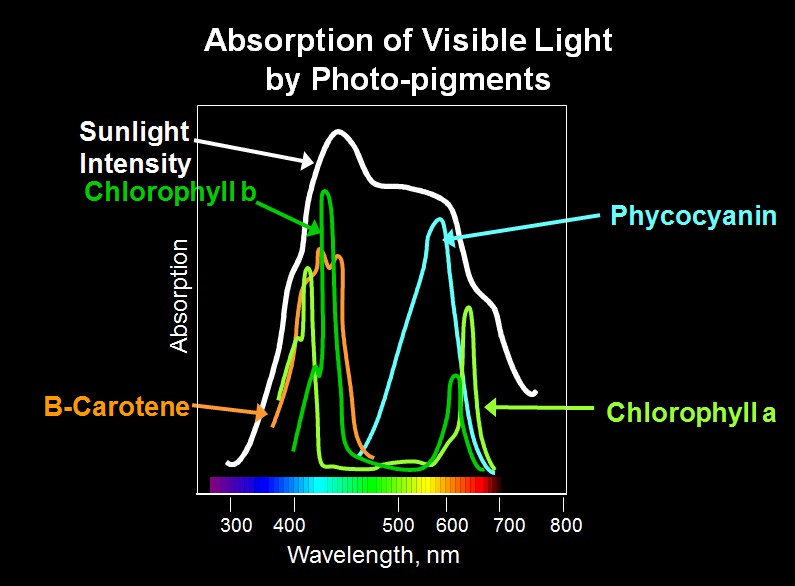 Absorption of Light
