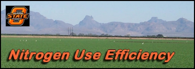 Nitrogen use efficiency, improved methods of N fertilization for corn and wheat